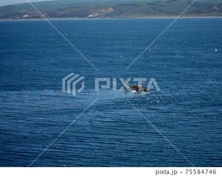 網を引く小さな漁船に餌を求めて群がるカモメたち 75584746