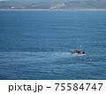 網を引く小さな漁船に餌を求めて群がるカモメたち 75584747