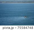 網を引く小さな漁船に餌を求めて群がるカモメたち 75584748