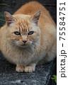 「我が輩は猫である」といわんばかりの存在感たっぷりの町内の人気者 75584751