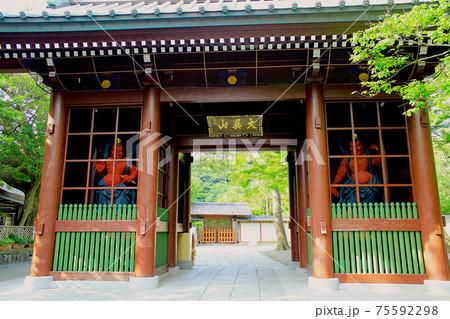 【神奈川】初夏の鎌倉 高徳院の仁王門 75592298