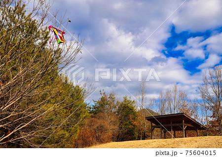 芝生広場の周りの木に絡まっていた凧を入れて撮影 75604015