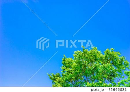 青空と新緑 【愛知県】 75646821