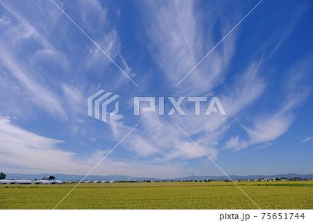 田園風景と青空 75651744
