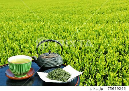 初夏の茶畑と新茶 75659246