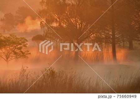 霧の渡良瀬遊水地内のカントリークラブ 75660949