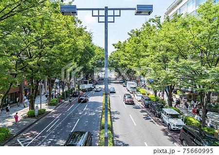 【東京都】夏の緑が綺麗な表参道 75660995