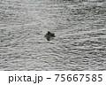 鴨 75667585