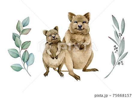 Quokka couple watercolor illustration. Native Australia funny animal. Two quokka smiling endemic australian mammal. On white background. Hand drawn sketch 75668157