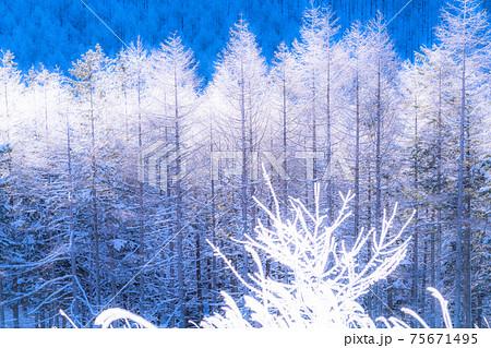 《長野県》霧氷の原生林・冬の霧ヶ峰高原 75671495