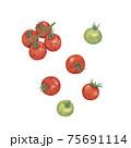 ミニトマト / Cherry tomato 手描きイラスト 75691114