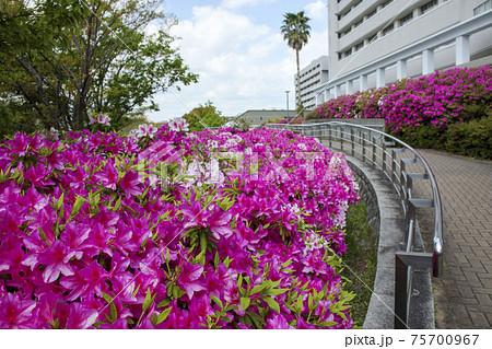 ホスピタルパークと大阪大学病院の建物 75700967