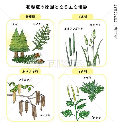 花粉 花粉症 原因 植物 イラスト セット 一覧 75702087