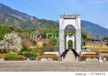 神奈川県立秦野戸川公園 風の吊り橋と丹沢山並みと青空 75709552