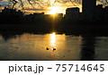 夕日に映る高層ビルとカモ 75714645