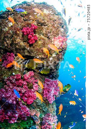 水中の色 75720485