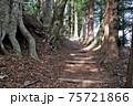奈良井宿、中山道の杉並木。樹齢数百年の杉の大樹が続く 75721866