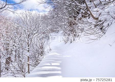 八東ふるさとの森へと続く雪道(鳥取県八頭郡八頭町)※作品コメント欄に撮影位置 75725281