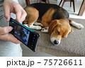 スマホで愛犬を撮影 75726611