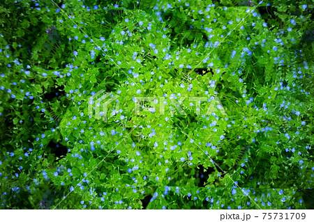 春の野花を万華鏡で見る9 75731709