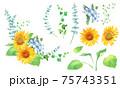ひまわりとオキシペタラムのフレーム装飾。水彩イラストのエレメントセット。 75743351