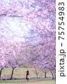 美しい桜並木と女性 後ろ姿 春爛漫 75754983