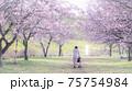 美しい桜並木と女性 後ろ姿 春爛漫 75754984