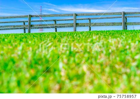 【新緑イメージ】愛知牧場の刈り揃えられた芝生【愛知県】 75758957