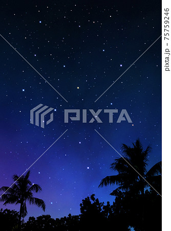 椰子の木と夜空、雄大な大自然の風景 75759246