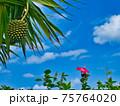 沖縄のアダンとハイビスカス 75764020