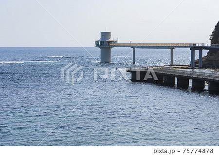 【千葉県】かつうら海中公園センター 75774878