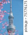 スカイツリーと桜 75776175