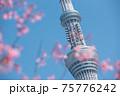 スカイツリーと桜 75776242