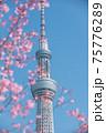 スカイツリーと桜 75776289