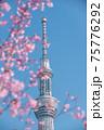 春の東京の風景 スカイツリーと桜 75776292