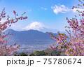 河津桜と富士山 75780674