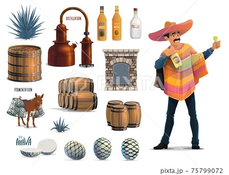 Tequila production, Mexican traditional drink 75799072