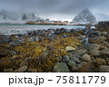 The magic of nature in Lofoten during winter 75811779