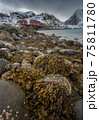 The magic of nature in Lofoten during winter 75811780