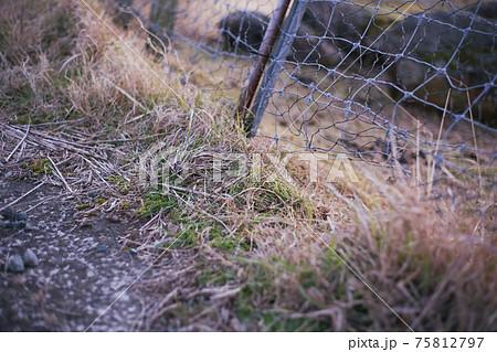 鹿や猪などの害獣による柵破壊被害 75812797