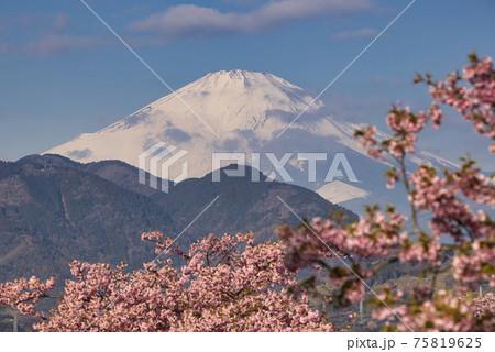 日本の春の象徴である美しい富士山と桜 75819625