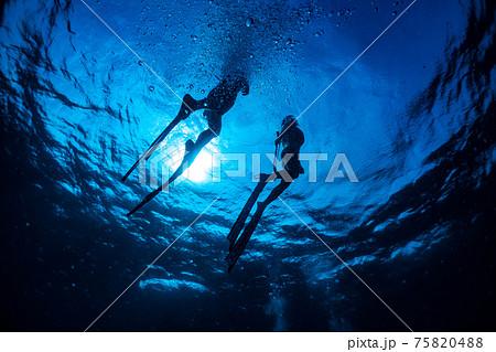 海の中のマーメイド 75820488