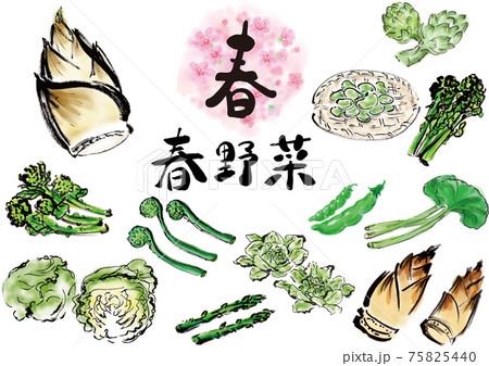春の野菜セット 手描き 75825440