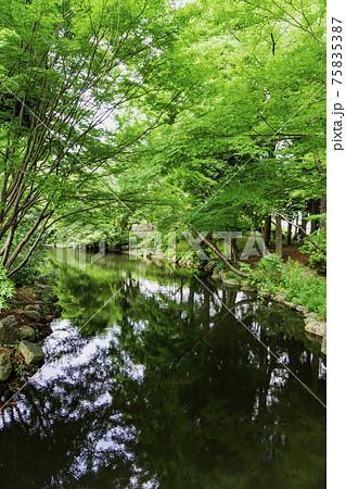 緑豊かな水辺/上尾丸山公園(埼玉県上尾市) 75835387