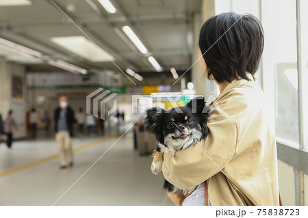 駅前で女性に抱っこされる黒いチワワ 75838723