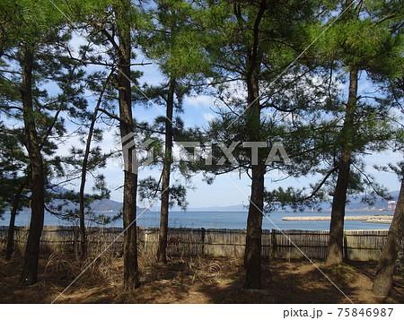 松林の向こうに見える海のある風景 75846987
