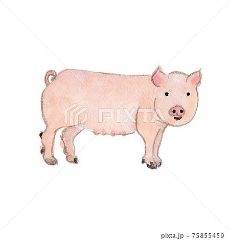 かわいい豚の水彩イラスト 75855459