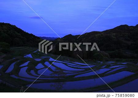 棚田の日暮れ風景 大山千枚田(千葉県) 75859080
