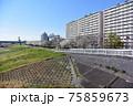 小松川千本桜 75859673