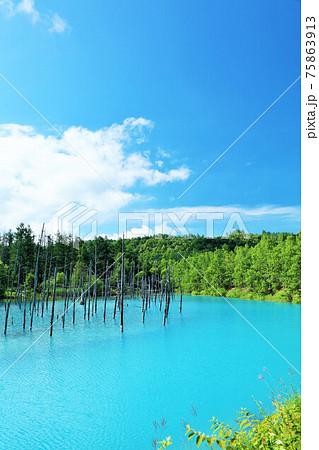 北海道 夏の青空と青い池 75863913